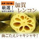《予約》加賀伝統野菜【加賀れんこん】約2k箱【送料無料】8月下旬から発送予定です