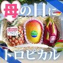 母の日に!食の宝石箱【T】トロピカルフルーツバスケット【ピーチパイン+アップルマンゴー+ドラゴンフルーツ】可愛い手提げ箱に入っています。【送料無料】