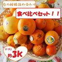 超お買い得!訳ありB級旬の柑橘5種類以上お任せ詰め合