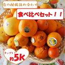 ご家庭用!訳ありB級旬の柑橘5種類以上お任せ詰め合わ