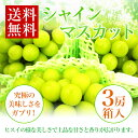【シャインマスカット】葡萄中3房化粧箱究極の美味しさをガブリ!【送料無料-クール】