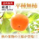 和歌山県福井県産【平種なし柿】 約7.5K箱28玉〜36玉【送料無料】
