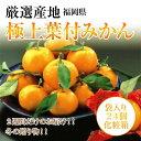 福岡県から極上葉付みかん袋入り24個化粧箱《送料無料》