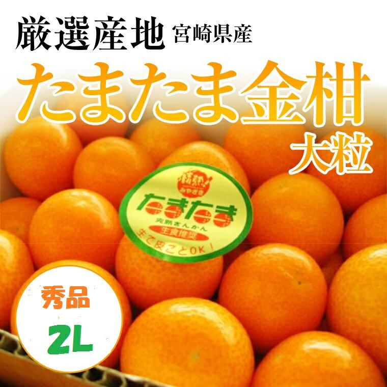 宮崎県ブランド【たまたま金柑】大粒 秀2L サイズ1袋250g5袋以上お買い上げの方《送料無料》