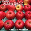 【数量限定特売100ケ−ス】B級長野・青森産りんご【富士】【サンフジ】【つがる】【陽