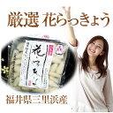 福井県三里浜「三年子花らっきょう」15袋入り箱送料無料