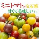 愛知・和歌山・岐阜他ミニトマトの宝石箱約1K箱【送料無料】