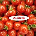 ★愛知・和歌山・岐阜他ミニトマト約1K箱赤いたまたまがギッシリ!