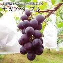 【ナガノパ-プル】 中5房化粧箱長野県オリジナルの黒紫ぶどう