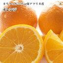 ★【オレンジ】お徳用30玉入りネーブルオレンジ・バレンシアオレンジ