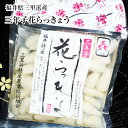 福井県三里浜「三年子花らっきょう」15袋入り箱