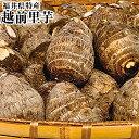 《お試し企画》福井県特産越前里芋約1K箱【青秀】【おせち料理】8袋まで1つの送料で配送いたします