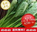 【送料無料】業務用小松菜 10kg【小松菜やや大きめ】※JGAP認証農場にて生産