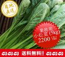 【送料無料】業務用小松菜 5kg【小松菜やや大きめ】※JGAP認証農場にて生産