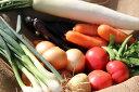 静岡県産 浜名湖近郊のおまかせ野菜セット(9品+ミニリーキ)合計10品目