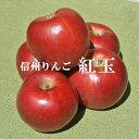 信州りんご【紅玉りんご】訳ありご家庭用 3kg9月下旬ごろから発送予定!