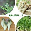山菜苗セット: プランター栽培も可能!薬味山菜苗 各2ポットセット