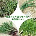 山菜苗セット: 野生のネギ属を食べ比べ! 薬味山菜苗 各2ポットセット