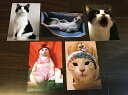 徒然猫屋。オリジナルポストカード 5枚セット
