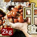 【秋だけの限定】愛媛県城川産の中粒生栗[2Lサイズ2kg入]
