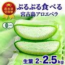 【食用】アロエベラ 生葉 沖縄 宮古島産 3kg