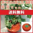 水耕栽培 キット ホームハイポニカ601果菜ちゃん