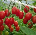 農薬不使用 化学肥料不使用 除草剤不使用