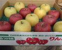 まるかじりできる津軽岩木山のリンゴ! 徹底減農薬 無袋栽培 サンふじ・王林(一級品)約10kg【発送時期11月中旬頃〜2月上旬頃】