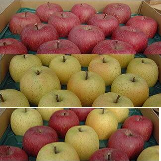まるかじりできる津軽岩木山のリンゴ!徹底減農薬、無袋栽培 サンふじ・王林(一級品)10kg 【発送 11月中旬 〜 2月上旬】