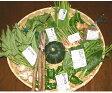 【送料無料】農薬を使わない野菜はこんなに清清しく美味!清流四万十から農薬、化学肥料を使わない野菜のセット(送料無料)【1回20口限定】05P09Jul16