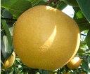 味、形ともりんご!甘さ一番、稀少新品種 中国山地の寒暖差が甘さの決め手除草剤不使用 減農薬栽培 樹上完熟白竜湖の梨・新星 5kg(10�12個)【発送 9月中旬 � 10月中旬】