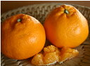 【ご予約受付中】新種!さわやかなな甘さと香り、ポンカンと清美のいいとこ取り有機肥料栽培柑橘 はるみ 3kg (15〜18個) 【発送 1月下旬頃 〜 2月中旬頃】