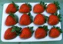 デザート!ケーキに!宝石の輝き、霞ヶ浦の甘味と酸味の絶妙なバランス、有機肥料栽培【新種いちご】やよいひめ 12個入り2パック【発送 12月上旬 〜 4月下旬】(特別なパッケージで大切にお届けします)05P07Feb16