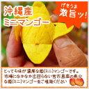 【送料無料】自然の力で完熟宮古島のミニマンゴー 1kg【発送期間 7月上旬〜7月末頃】