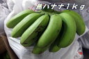 【送料無料】バナナだけどバナナではないバナナ稀少沖縄産・島バナナ5kg【発送期間 7月上旬�10月上旬頃】05P06Aug16