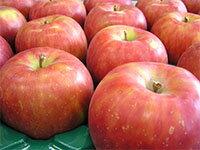 【平成22年度産】【送料込】紅玉青森りんごノーワックス約4.5kg(約23~25玉)【竹嶋有機農園】【代引不可】【同梱不可】