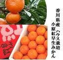 「希少品種」香川県産 果皮が赤く袋が薄い小原紅早生ハウスみかん 1箱1.2kg(L〜2S寸)