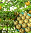 石川県奥谷梨出荷組合 濃厚な甘味 サクっとした食感、こだわりの梨「加賀の梨 奥谷の幸水梨」1箱2.5kg(7〜8玉)
