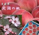 青森県産 昼夜の温度差が生んだ味わい 「北国の桃」1箱4.5kg(12〜17玉)