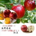 ジャムに最適!!青森県産 紅玉 1箱 2kg(8~10玉)