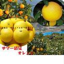 「中島 サマー清見オレンジ」愛媛中島よりお取り寄せ!!お試し1箱1.5k(Mから3L寸)※簡易箱でのお届けとなります