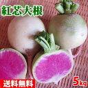 【送料無料】静岡県産 紅心だいこん 約5kg 10~15個入り