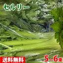 【送料無料】静岡県産 セルリー(セロリ)L〜2Lサイズ 5〜...
