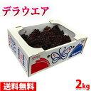 【送料無料】島根県産ぶどう デラウェア 秀品・Lサイズ 2kg(10~14房入り)