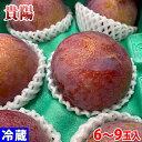 長野県産プラム 貴陽 9玉入り(約1.5kg)