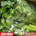 送料無料 長野県産 セロリ Lサイズ 10kg(6株入)