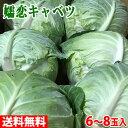 送料無料 群馬県産 嬬恋(つまごい)キャベツ 8玉入り/箱