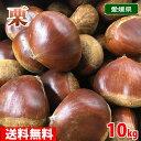 【送料無料】愛媛県産 ブランド栗(くり)2L~3Lサイズ 10kg
