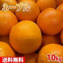 【送料無料】 和歌山県産 ネーブル(ネーブルオレンジ)L~LAサイズ 10kg
