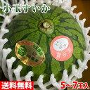 【送料無料】鹿児島県産 小玉すいか A等級 5~7玉入(箱)